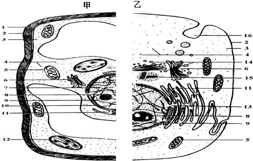 高中细胞结构图手绘